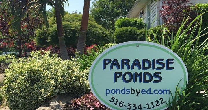About Our Services | Paradise Ponds by Ed Dedicke