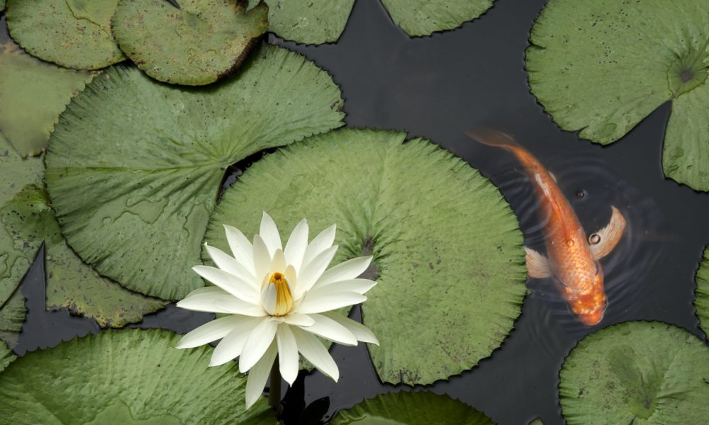 Schedule Your Spring Clean Out With Paradise Ponds
