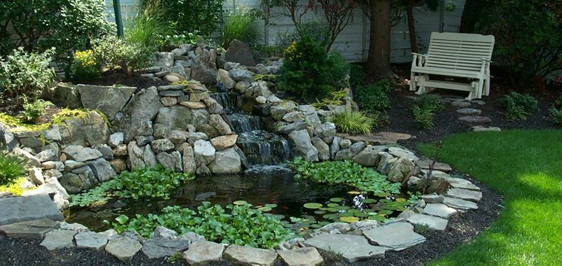 6 Essential Elements of Any Backyard Pond