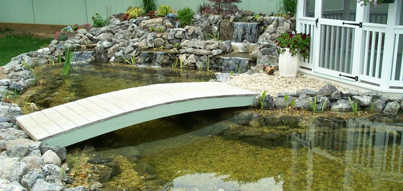 Reasons to Install a Backyard Pond