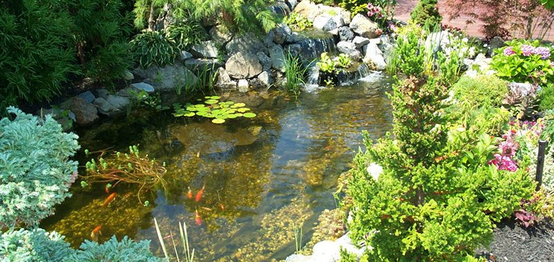 Natural ways to care for your pond paradise ponds by ed for Natural pond maintenance