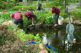 Pond Care 101