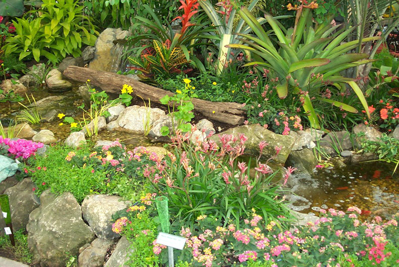 The Best Plants for Your Backyard Pond