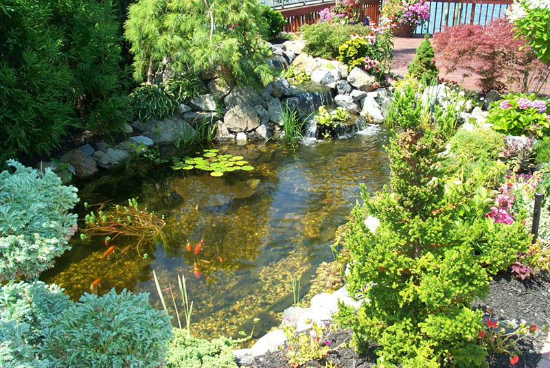 Natural Ways to Care for Your Pond