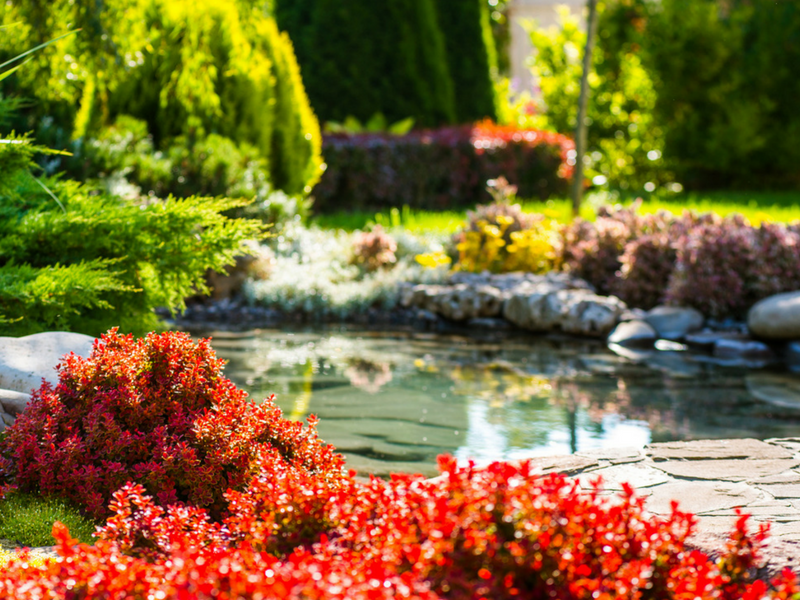 How To Mange Your Pond Plants
