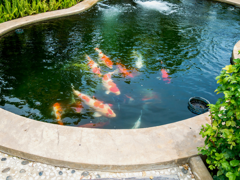 When Should I Close My Pond?