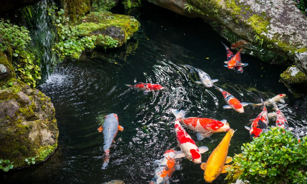 How To Keep Your Fish Healthy Year Round