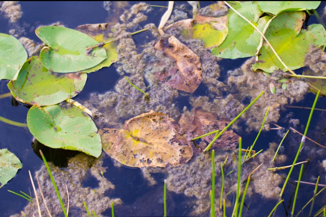 Common pond problems and how to fix them paradise ponds for Pond problems