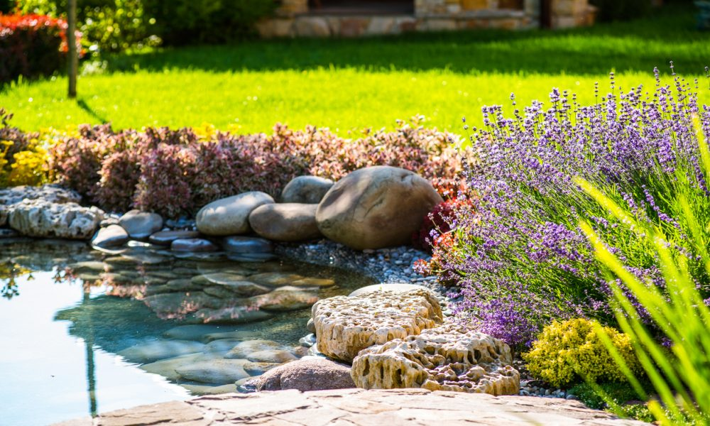 5 of The Most Popular Pond Plants