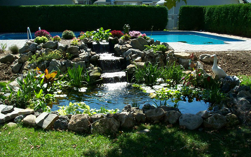 3 Top Things You Should Know About Your Pond