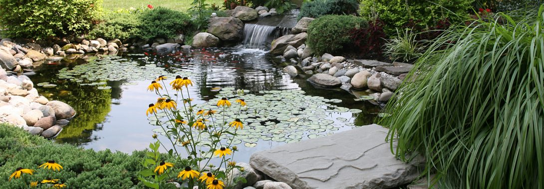 Determining The Size of Your Pond