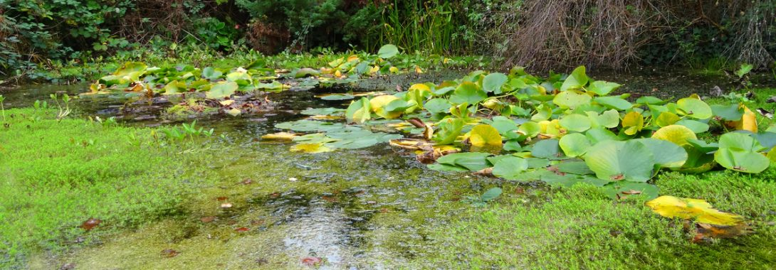 The 3 Worst Things You Can Do To Your Pond