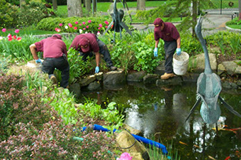 Why You Need a Professional to Install Your Pond
