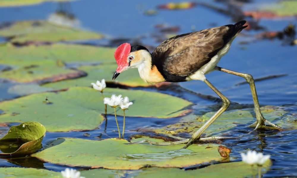 How to Attract Birds to Your Pond