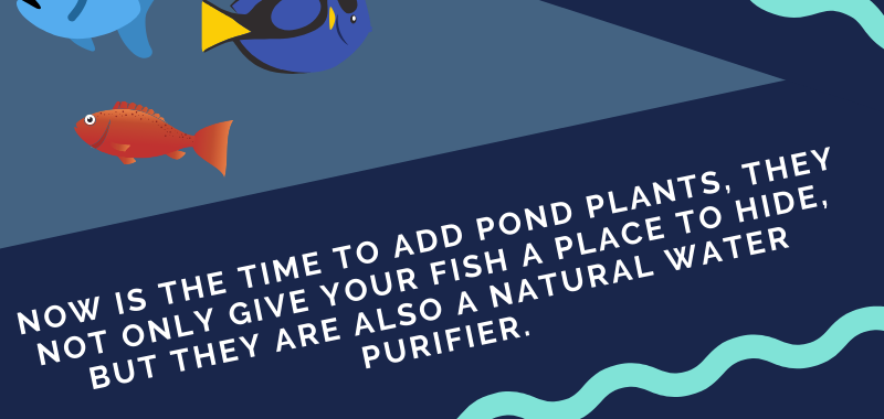 Easy Pond Cleaning Tips