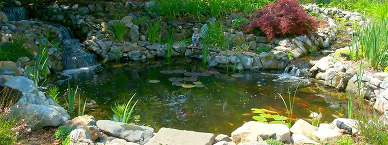 Paradise Ponds | The Pond Repair & Installation Experts